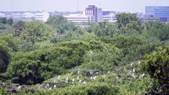 Bird Sanctuary at UT Southwestern